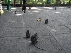 そこら中に猿